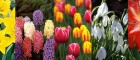 5 must have Spring bulbs for your garden