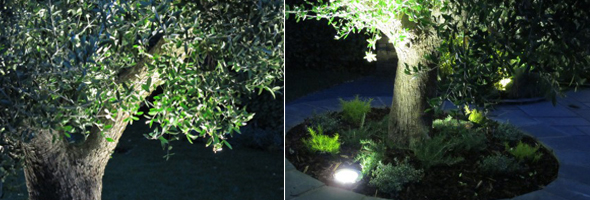 Bright Ideas for your garden: LED Lighting