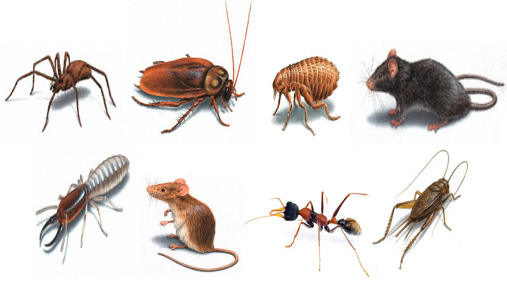 Make your house immune to pests