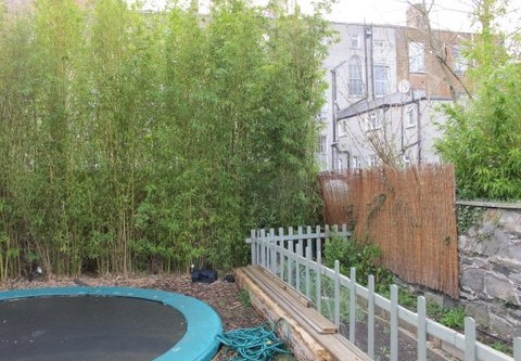 Landscape Gardening in Rathmines – controlling the spread of mature Bamboo