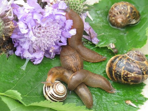 More ways to cut the damage by slugs and snails